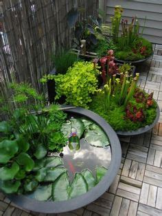 water garden containers for sale 1000 images about wasser on water garden