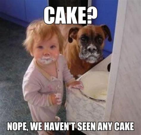 No Cake Meme - no cake here