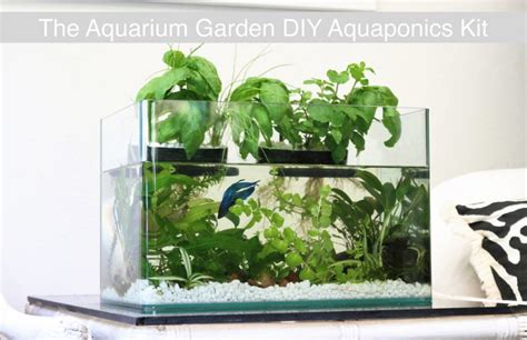 Aquarium Garden Transforms Any Fish Tank Into A Lush Fish Tank Vegetable Garden