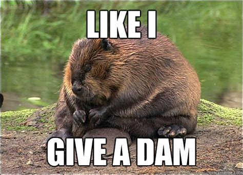 Beaver Meme - like i give a dam angry beaver quickmeme