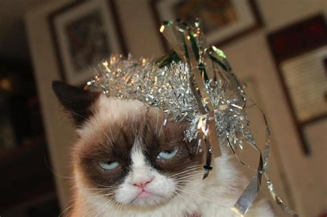 new year cat images a grumpy cat introvert