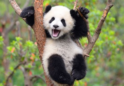 Mata Panda the staggering 100 000 yuan logo design competition authorities seek global entries for
