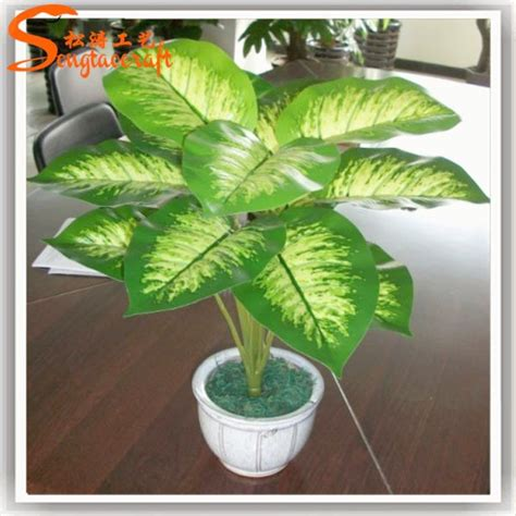 indoor plant images with names indoor plants names and pictures home design