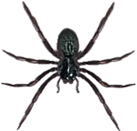 are house spiders dangerous spider identification the most poisonous spiders in the world