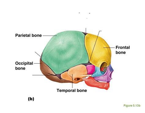 6 Fontanelles Of The Fetal Skull