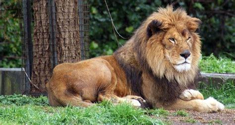 imagenes medicas amado de leon 191 le 211 n tito muri 211 por mal procedimiento m 201 dico