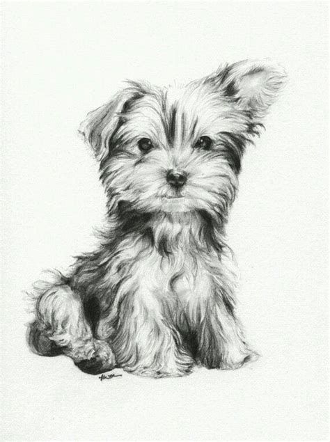 drawings of yorkies 25 best ideas about drawings on how to draw dogs drawing