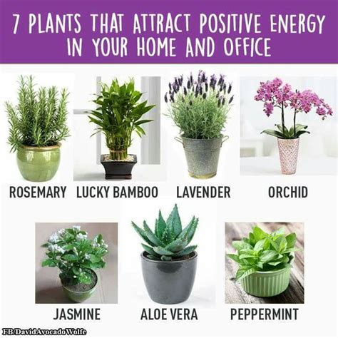 positive energy home decor home gym 7 plants that attract positive energy in your