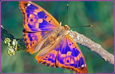 imagenes de mariposas reales bonitas mariposas de colores ex 243 ticos para disfrutar imagenes de