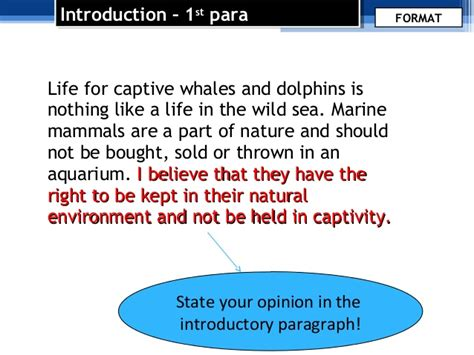 Orcas In Captivity Essay by Argumentative Essay Format And Language Use