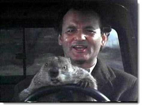 groundhog day with bill murray sad looking 1958 standard 10