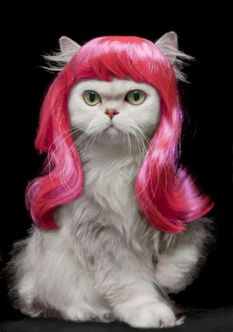 cat wig cats wearing wigs the things