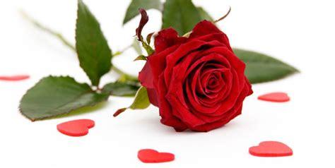 Merah Ros butterfly bunga ros