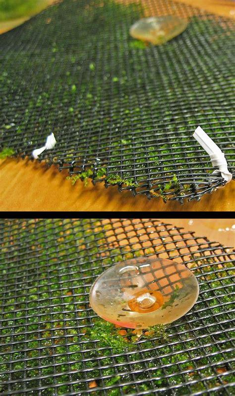 aquascaping for beginners how to grow aquatic moss wall aquascape aquarium freshwater aquarium plants for