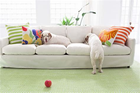 pet friendly sofa material pet friendly sofas 15 dog friendly couches perfect for