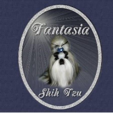 shih tzu breeders alberta fantasia shih tzu shih tzu breeder in sherwood park alberta listing id 12994