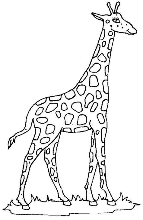 dancing giraffe coloring page coloring giraffe picture giraffe pinterest