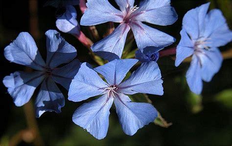 come prendere i fiori di bach quale decisione prendere i fiori di bach per l