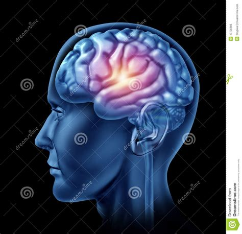 How To Be A Genius Your Brain And How To It spark of genius brain lobes cortex intelligen royalty free stock image image 17705866
