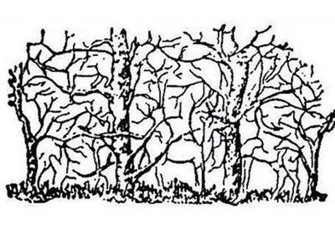 imagenes buscar cosas ocultas optical illusions hidden animals in trees illusion