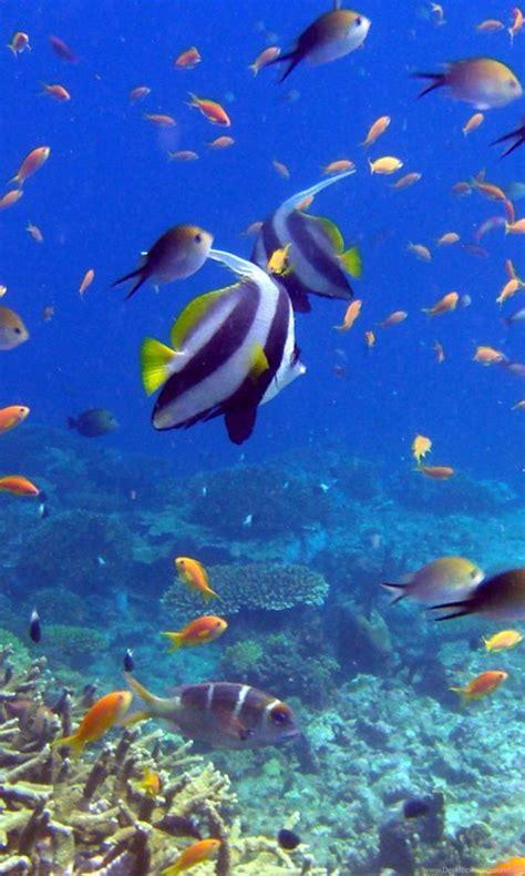 wallpapers  fish coral underwater  ultra hd desktop background