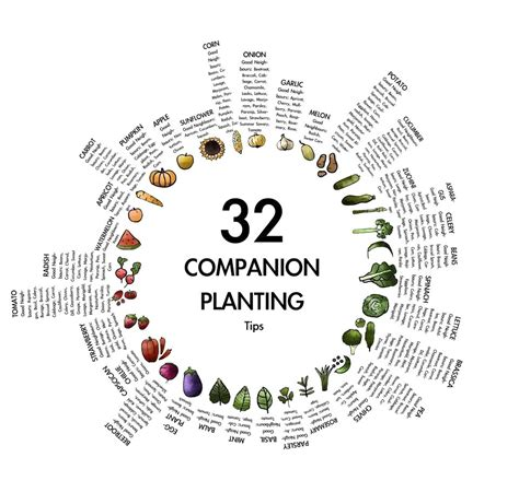 Vegetable Garden Layout Companion Planting The Garden Companion Garden Layout