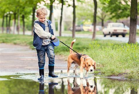 imagenes de niños jugando con animales v 237 deo de unos beagles y ni 241 os jugando