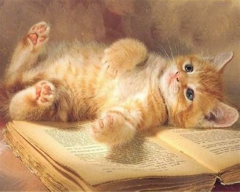 wallpaper cat book reading break book orange cat rest cute bios