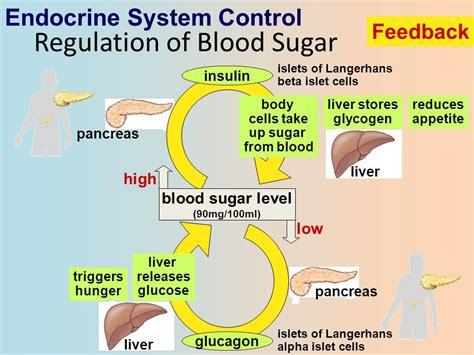 system sugar endocrine system hormones ch 45 ppt video online