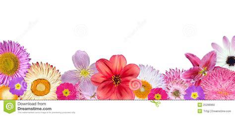 imagenes de varias flores las varias flores rosadas rojas blancas en la parte