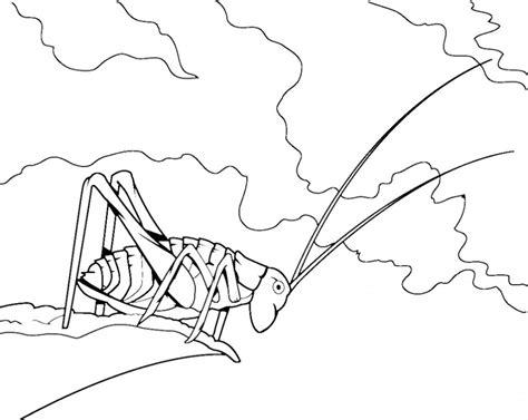grasshopper coloring page az coloring pages