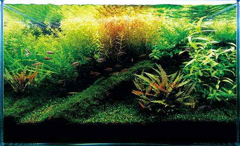 amano aquascape ada fish aquariums the worlds best planted aquarium products