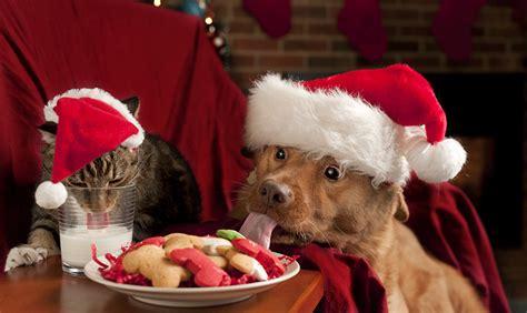 alimenti che i cani non possono mangiare cena di natale cibi che possono mangiare i cani e gatti