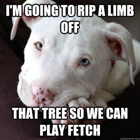 Pitbull Puppy Meme - i m going to rip a limb off that tree so we can play fetch