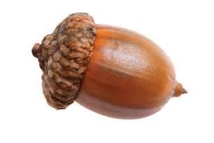 acorn nut png transparent images free pik psd