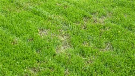 Schädlinge Im Rasen 3129 by Sch 228 Dlinge Im Rasen Sch Dlinge Im Rasen Erkennen Und