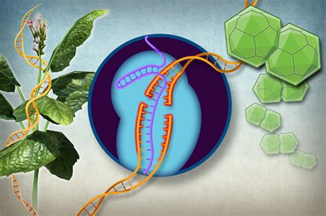 Online Planning Tool gene editing technology harnessed to protect plants from