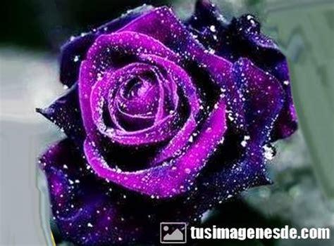 imagenes de rosas negras hermosas im 225 genes de rosas hermosas im 225 genes
