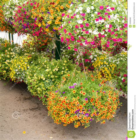 Hanging Flower Garden Hanging Flower Baskets Stock Photo Image Of Retail Garden 29289080