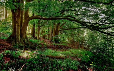 wallpaper for walls forest forest wallpapers wallpaper cave