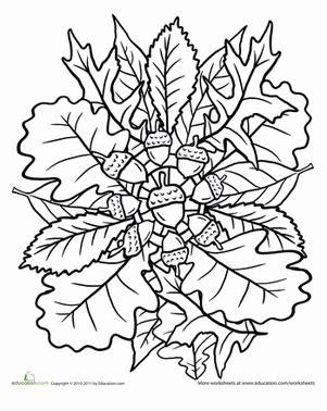 nature mandala coloring pages printable oak tree coloring page mandala oak tree mandalas and