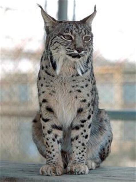 imagenes animales bellos los 30 animales mas bellos del mundo im 225 genes