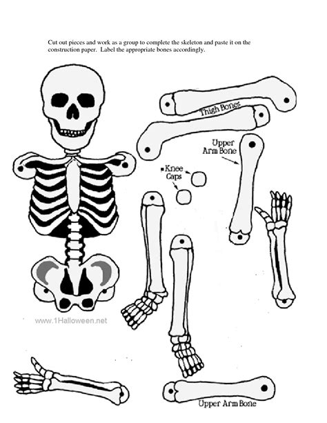 printable label the skeleton skeletal system without label google search preschool