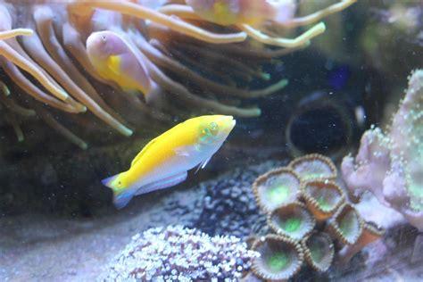 new year white belly fish my aquarium specs