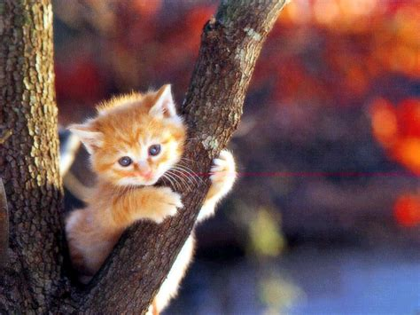cat wallpaper latest cute cat wallpapers entertainment only