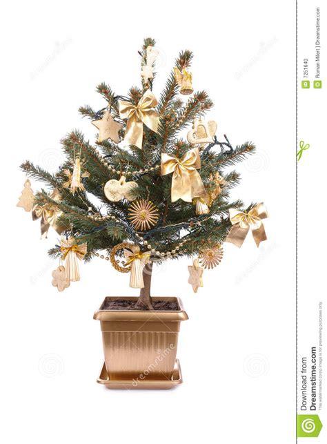 vaso per albero di natale albero di natale conservato in vaso fotografia stock