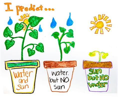 plants that do not need much sunlight predictions about plants crayola com