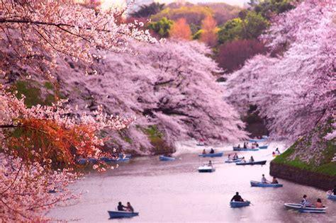 imagenes de sakura japon tatil fikri japonya da sakura 199 i 231 ekleri ne zaman a 231 ar