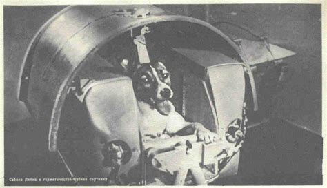 soviet space dogs the cold war sputnik and soviet space laika