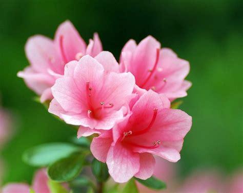 fotos muy bonitas de flores flores bonitas para tu terraza o jard 237 n